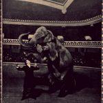 Disappearing_Elephant-Harry_Houdini