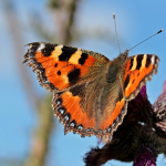 Butterfly_650x_PNG