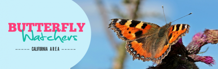 Facebook Cover Butterfly Watchers - California 650x