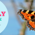 Facebook_Cover_Butterfly_Watchers_650x