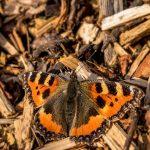 butterfly-2171745_640
